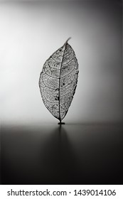 Skeleton leaf, standing, in light and shadow. A Naturally created skeleton leaf (found in nature) .