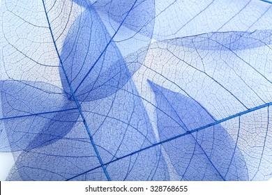 Skeleton leafs background, close up