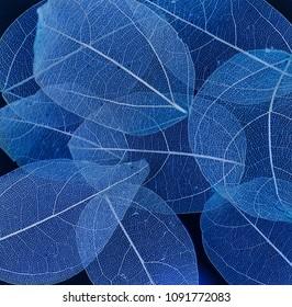Skeleton Leaves Flower Composition on black background,transparent blue leaves