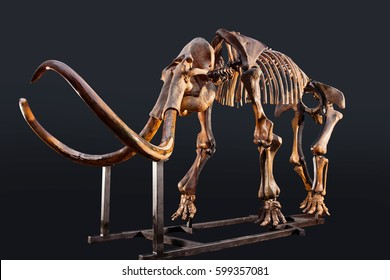 The skeleton of a mammoth in the dark
