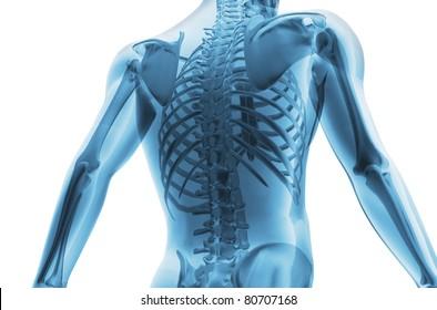 Skeleton of the man. 3D the image of a man's skeleton under a transparent skin
