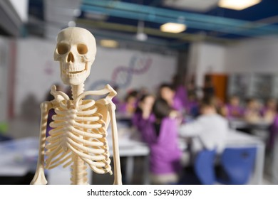 skeleton model in class