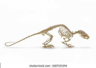 Animal Skeleton Images, Stock Photos & Vectors | Shutterstock