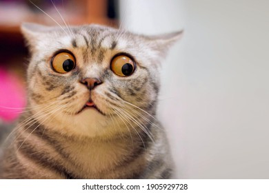 Skeptic surprised cat thinking  dont know what to do, big eyes closeup. Tabby cat look side dont know, funny face. Cute tabby cat looking scared, thinking. Wide eyed kitten dont know why, portrait