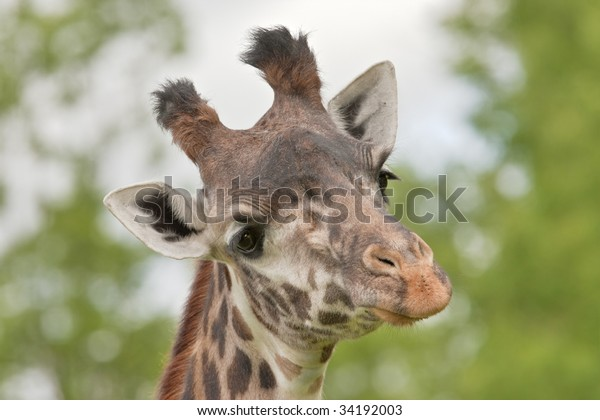 skeptical-giraffe-600w-34192003.jpg