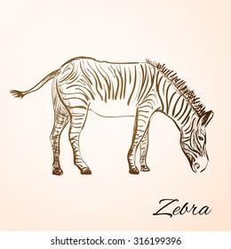 Sketch Doodle Drawing zebra,