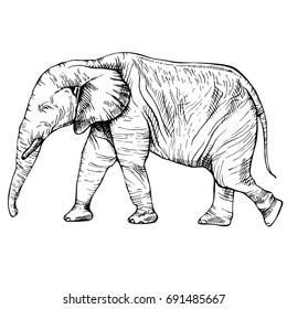 Sketch elephant in full growth, moving elephant, ink graphic black and white drawing