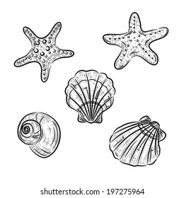 A sketch of starfish, scallop and snail