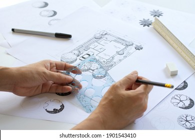 sketching by hands, layout plan and  plant symbols in landscape design or garden design or landscape architecture with black pen, circle template ruler, scale ruler and other tools, selective focus