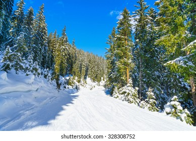 Ski slope through a forest.