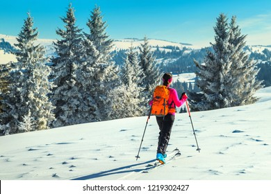 Ski touring in high alpine landscape with snowy pine trees. Adventure, winter activities, skitouring on the spectacular slopes, Transylvania,Carpathians,  Romania, Europe