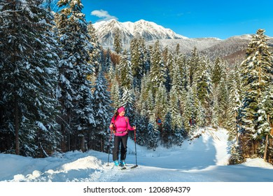 Ski touring in the snowy forest and Bucegi mountains in background. Active sporty woman reaching the top of mountain, Azuga ski slope, Transylvania, Romania, Europe