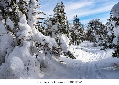 ski track among snow-covered firs on Taganay, Ural, Russia