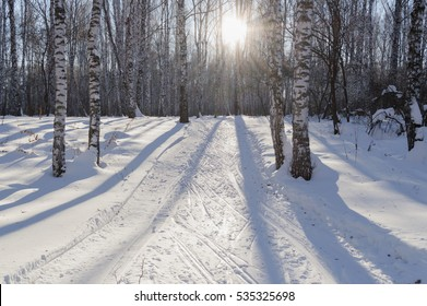 ski tracks in winter birch forest on sunny day with sunlight