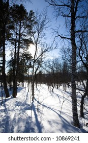 Ski trail through the forest - back country skiing