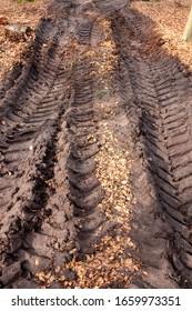 Skidder tire tracks along muddy logging trail
