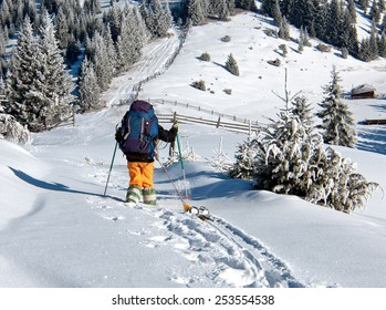 skier rises uphill in the mountains covered with pine trees