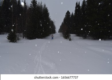 skier in the woods on the ski track