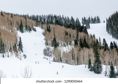 Skiers enjoy the snowy winter slopes at the Steamboat Springs Ski Resort, on Mount Werner, lined by Pine trees and Aspen trees, in the Rocky Mountains of Colorado
