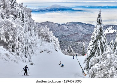 Skiers and snowboarders enjoy the ski slopes in Poiana Brasov winter resort whit forest covered in snow on winter season