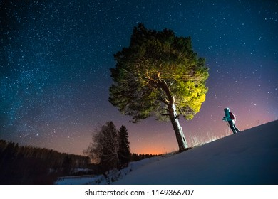 Skiier stands in the forest near the big pine tree during starry night