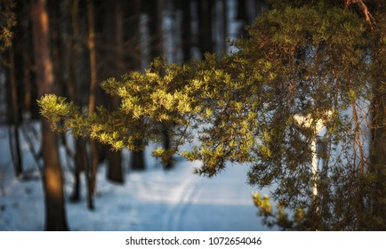 Skii'ing path with a branch of a tree in focus.