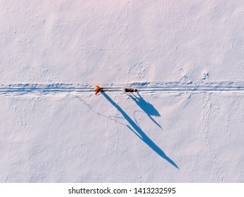 Skijor ski on track with dog malamute. Concept winter holiday. Aerial top view.