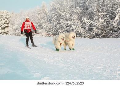 skijoring, competitions, dogs, Russia, Republic of Karelia, 2013-01-19