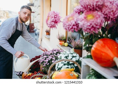 Skilled handsome young man watering with care and patience chrysanthemums while working as florist outdoor with showcase in a modern flower shop. Small business concept.