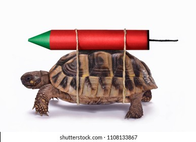 Skilled turtle get fast with rocket.