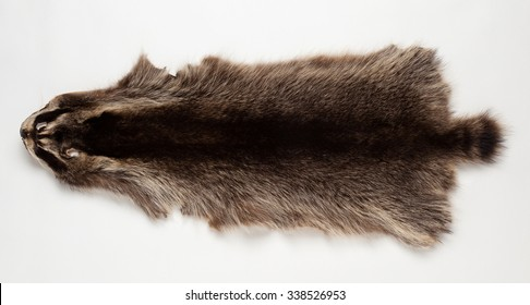 Skin beaver isolated on white background
