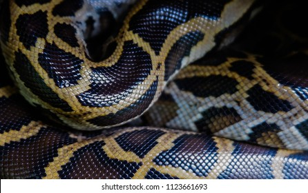 Skin of Burmese python, Close up Pattern Reticulated python Boa Snake skin abstract textured