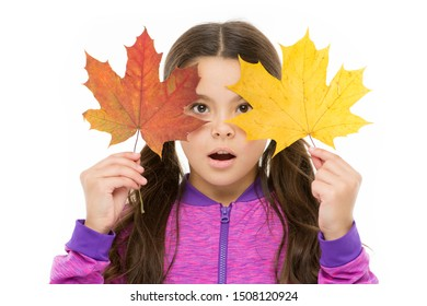 Skin care concept. Fall colors are funny. They are so bright and intense and beautiful. Kid girl hold fallen maple leaves. Happy small child play with autumn leaves. Kid isolated on white show leaves.
