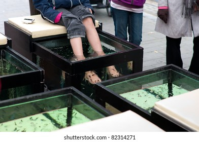 skin care treatment with the garra rufa fish, also called doctor fish, nibble fish or kangal fish.