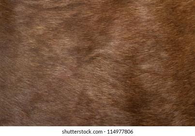 Skin of a deer, background