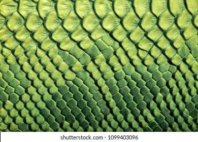 Skin reptile green crocodile skin texture snake background close-up