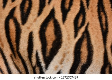 Skin and tiger skin image on the middle of the body.