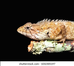 Skink lizard on tree trunk