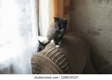 Skinny black and white kitten sitting on the chair. Yellow-eyed kitten stands on a gray couch. Cute black and white kitten looking at the camera.