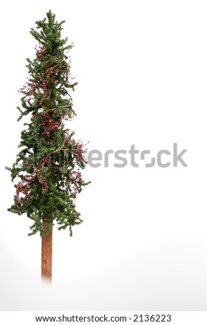 Skinny Christmas tree isolated on white. - Skinny Christmas Tree Isolated On White Stock Photo (Edit Now