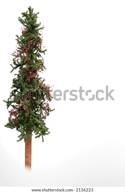 Skinny Christmas tree isolated on white.