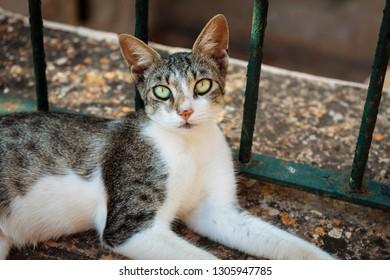 skinny mixed house cat