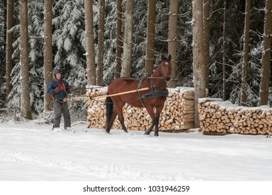 Skioring, winter sports with horse. A man stands on skis and lets himself be dragged by his horse through the winter landscape. Skijoring is a winter sport, which has its roots in Scandinavia.