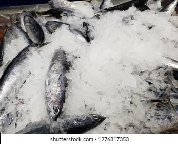 Skipjack tuna fish in cold flaky ice at supermarket. In Malaysia this fish known as 'tongkol' fish.