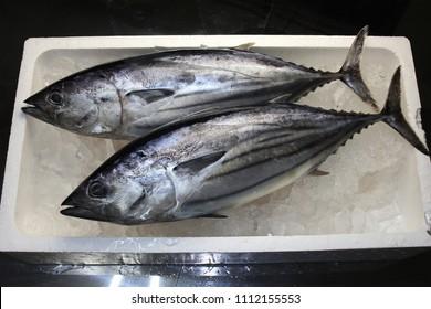 Skipjack tuna in the market
