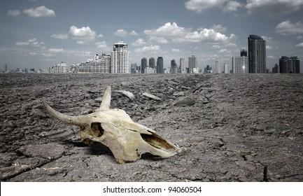 skull animal on dry land.