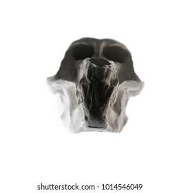 A Skull of An Ape