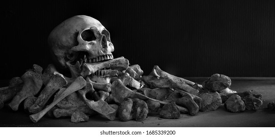 The skull biting bone in the mouth on pile of bone and on dark background / Select focus, Still life image, space for text, adjustment, size and color, black and white, for background