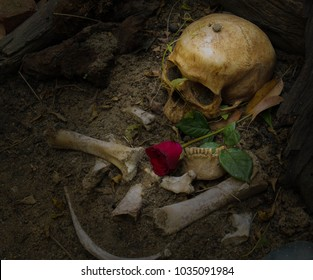 skull and bone excavated from the hole were left in the grave. There are roses on the side. Expresses past love / life that remains fresh and selective focus.