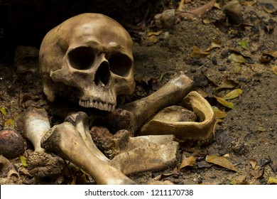 Skull and bones digged from pit  with dark light, Concept halloween day, still life style.